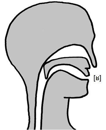 Artikulation des stimmhaften schwachen Zäpfchen-Fließlauts