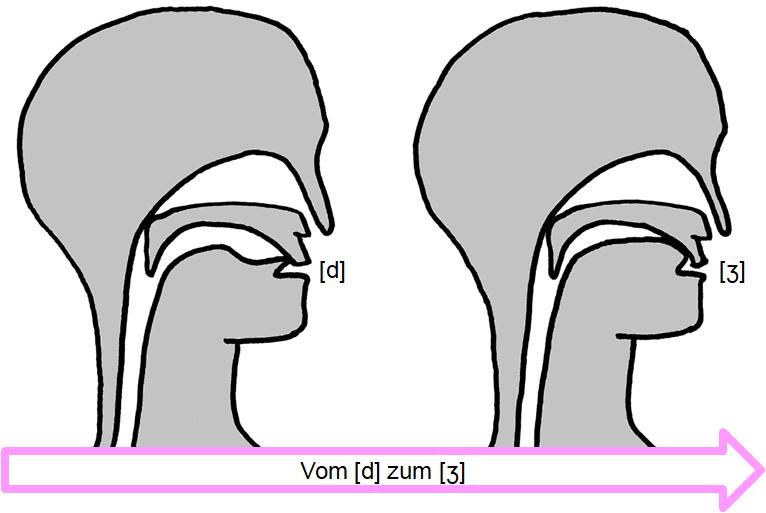 Artikulation des stimmhaften Verschluss-Reibelauts [d͜ʒ]