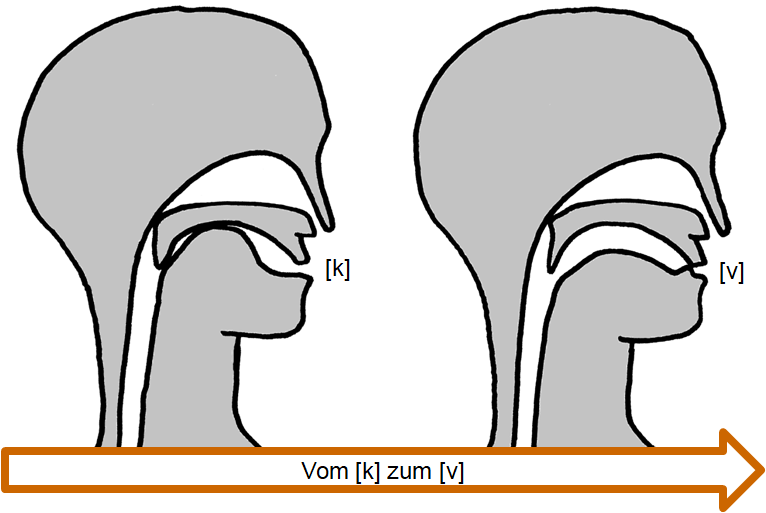 Artikulation des stimmhaften Verschluss-Reibelauts [k͜v]