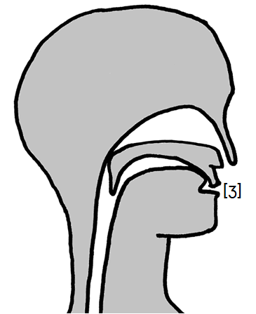 Artikulation des stimmhaften Gaumen-Zischlauts