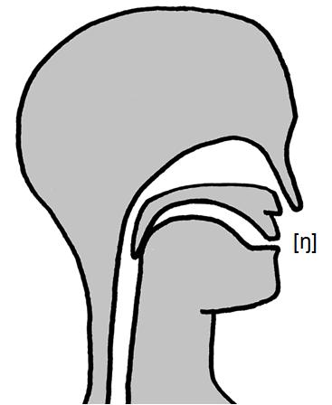 Artikulation des stimmhaften Hintergaumen-Nasenlauts