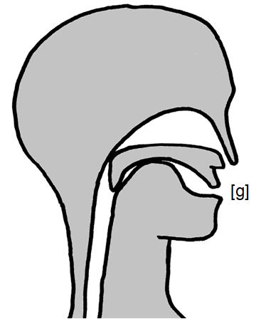Artikulation des stimmhaften Hintergaumen-Verschlusslauts