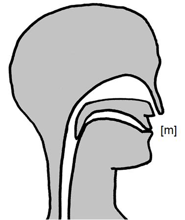 Artikulation des stimmhaften Lippen-Nasenlauts