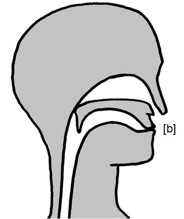 Artikulation des stimmhaften Lippen-Verschlusslauts