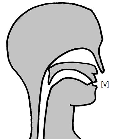 Artikulation des stimmhaften Lippenzahn-Reibelauts