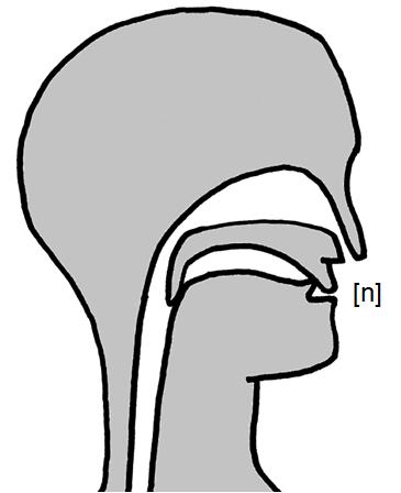 Artikulation des stimmhaften Zahn-Nasenlauts