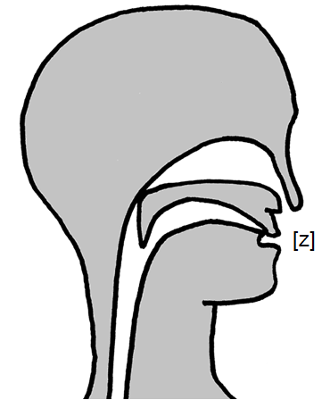 Artikulation des stimmhaften Zahn-Zischlauts