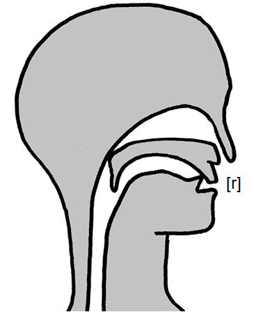 Artikulation des stimmhaften Zungenspitzen-Fließlauts