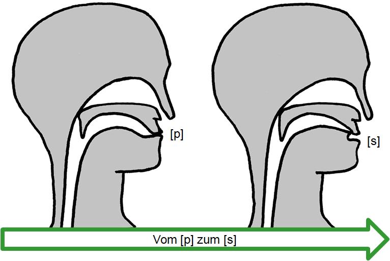 Artikulation des stimmlosen Verschluss-Reibelauts [p͜s]