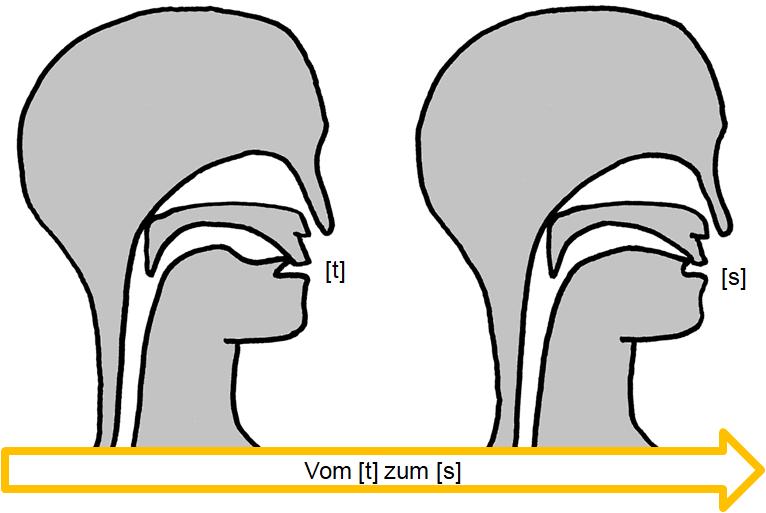 Artikulation des stimmlosen Verschluss-Reibelauts [t͜s]