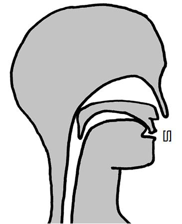 Artikulation des stimmlosen Gaumen-Zischlauts