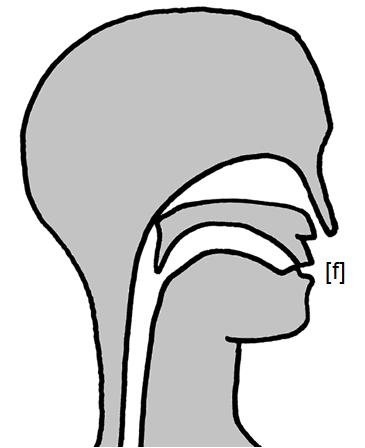 Artikulation des stimmlosen Lippenzahn-Reibelauts